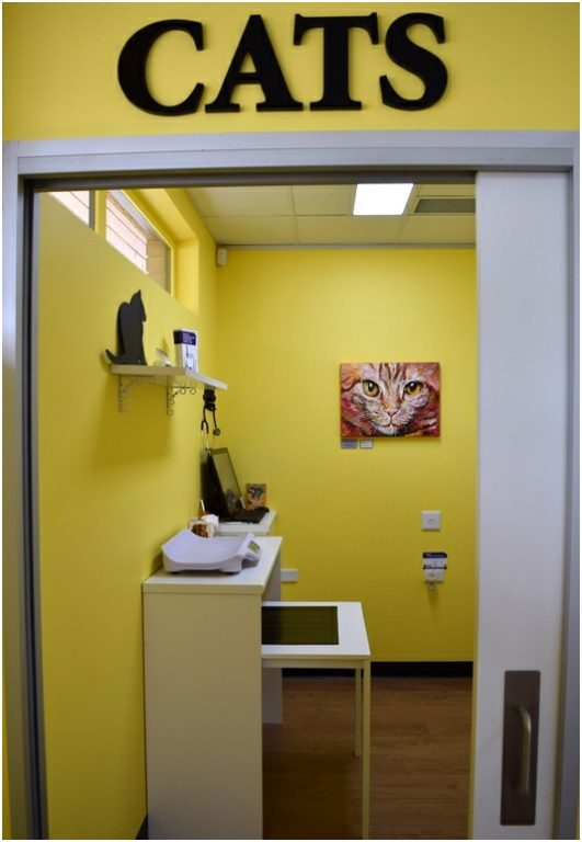 Curtin Veterinary Clinic cat consult room