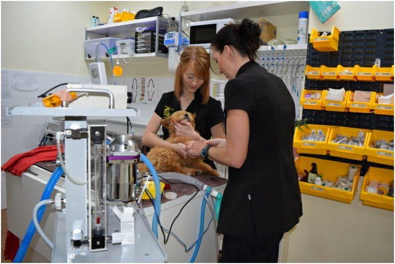 Curtin Veterinary Clinic prep room