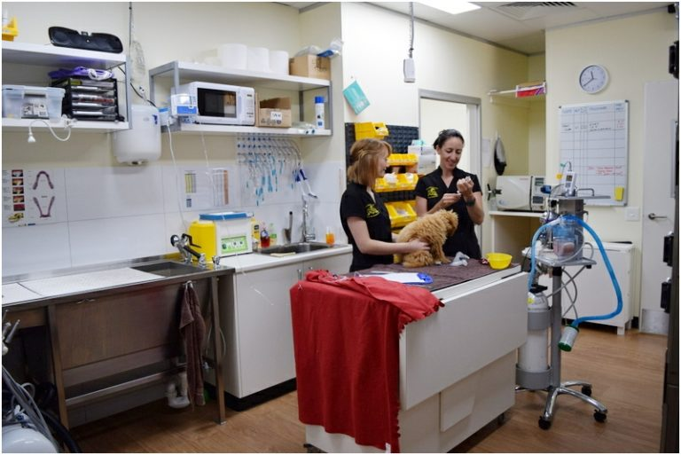 Curtin Veterinary Clinic prep room