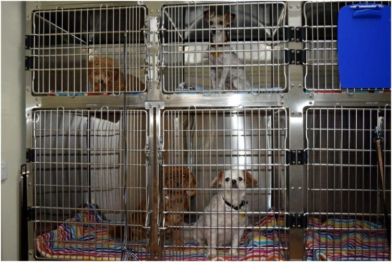 Curtin Veterinary Clinic dog ward