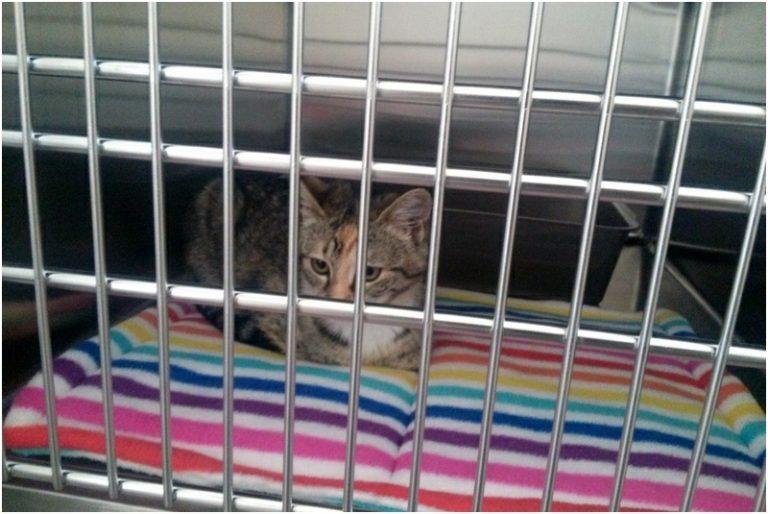 Curtin Veterinary Clinic cat ward