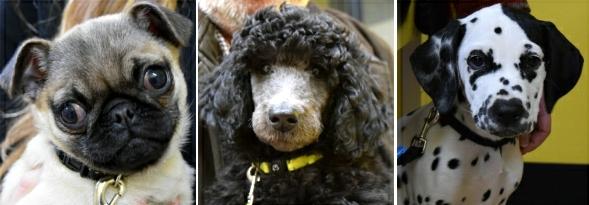 Curtin Veterinary Clinic - Puppy Preschool