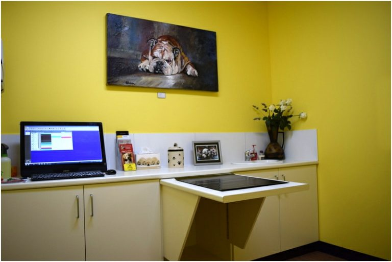 Curtin Veterinary Clinic dog consult room