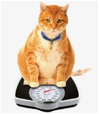Curtin Veterinary Clinic slimmers club
