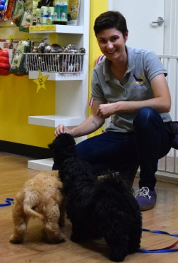 Curtin veterinary clinic puppy preschool classes