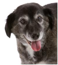 Curtin Veterinary Clinic seniors club