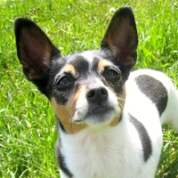 Curtin Veterinary Clinic choosing the right dog breed