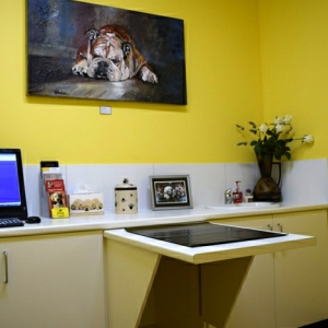 Curtin Veterinary Clinic virtual tour
