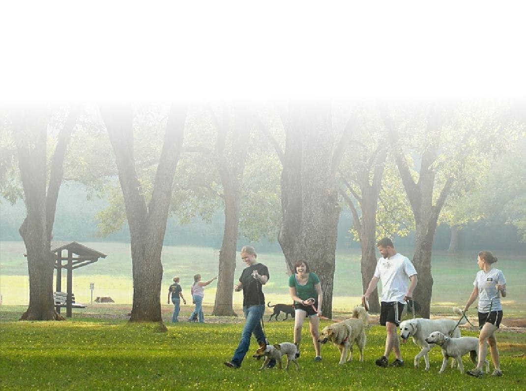 Curtin Veterinary Clinic Saturday morning walking club