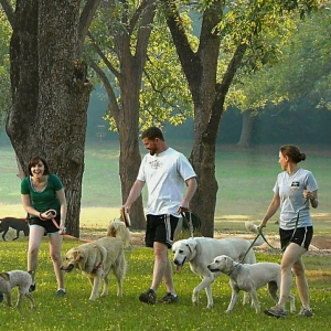 Curtin Veterinary Clinic Canberra dog walking club
